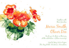 Vector background with orange watercolor nasturtium Royalty Free Stock Photography