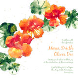 Vector background with orange watercolor nasturtium. For wedding invitation or flyer Royalty Free Stock Photography