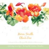 Vector background with orange watercolor nasturtium Royalty Free Stock Photos
