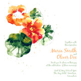 Vector background with orange watercolor nasturtium Royalty Free Stock Images