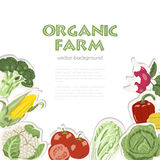 Vector background with organic vegetables. Suitable for advertising organic farm or a healthy lifestyle Royalty Free Stock Photos