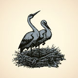 Vector background with pairs of storks in the nest Stock Photos
