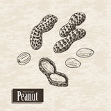 Vector background with peanut Stock Photo