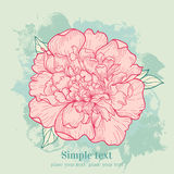 Vector background with peony Stock Image
