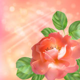 Floral background with rose, sun and blur Stock Photo