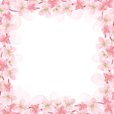 Vector background with pink flowers. Vector eps-10 Stock Photos