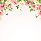 Vector background with pink and white roses. Vector background frame with pink and white roses Royalty Free Stock Photo
