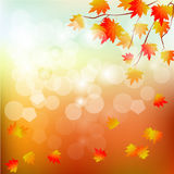 Vector background with red, orange, brown and yellow autumn leaves. Stock Image