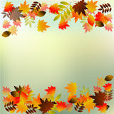 Vector background with red, orange, brown and yellow autumn leaves. Royalty Free Stock Photo