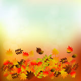 Vector background with red, orange, brown and yellow autumn leaves. Royalty Free Stock Image
