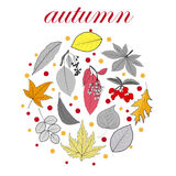 Vector background with red, orange, brown and yellow falling autumn leaves. Autumn concept of colorful leaves and berries royalty free illustration
