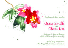 Vector background with red watercolor camellias Royalty Free Stock Photography