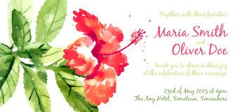 Vector background with red watercolor hibiscus Stock Photography