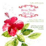 Vector background with red watercolor hibiscus Royalty Free Stock Photography