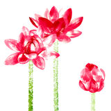 Vector background with red watercolor lotus Royalty Free Stock Images