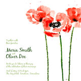 Vector background with red watercolor poppies Royalty Free Stock Photos
