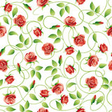 Vector background with roses. Flowers on a white background with curls. Continuous figure Royalty Free Stock Image