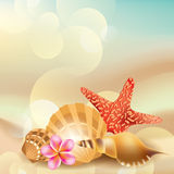 Vector  background with sea shells Royalty Free Stock Photography
