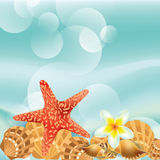 Vector background with sea shells Royalty Free Stock Image