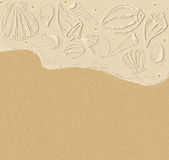 Vector background with sea shells Stock Image
