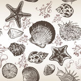 Vector background with sea shells in engraved style Stock Photo