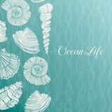 Vector background with sea shells Royalty Free Stock Photo