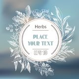 Vector background sketch herbs. Herbs - Bay leaf, dill, thyme, sage, rosemary, Basil, parsley, arugula. Royalty Free Stock Image