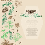 Vector background with spices and herbs Stock Image