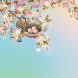 Spring Apple blossom Royalty Free Stock Image