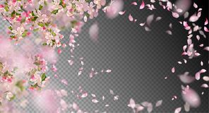 Spring Cherry Blossom. Vector background with spring cherry blossom. Sakura branch in springtime with falling petals and blurred transparent elements Royalty Free Stock Photo