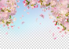 Spring Cherry Blossom. Vector background with spring cherry blossom. Sakura branch in springtime with falling petals and partially transparent background vector illustration