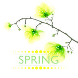 Vector background with spring flowers Royalty Free Stock Photo