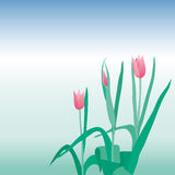 Spring tulips Royalty Free Stock Photo