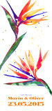 Vector background with Strelitzia flower Royalty Free Stock Photos