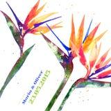 Vector background with Strelitzia flower Stock Image
