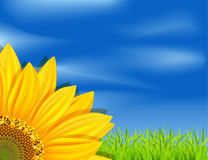 Vector background with sunflowers vector illustration