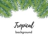 Vector background. Template for card or poster with isolated frame pattern green exotic tropical coconut palm leaves stock illustration