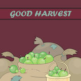Vector background on a theme of good apple harvest Royalty Free Stock Photography