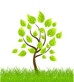 Vector background with tree and grass Stock Image