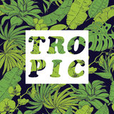 Vector background with tropical plants and flowers on dark background Royalty Free Stock Image