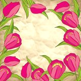 Vector background with tulips Royalty Free Stock Photo