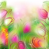 Vector background tulips. Vector background of delicate and colorful tulips stock illustration