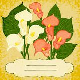 Vector background with vignette and flowers Royalty Free Stock Photography