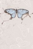 Vector background with watercolor butterfly Royalty Free Stock Images