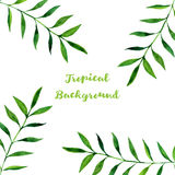 Vector background with watercolor green leaves royalty free illustration