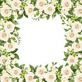 Vector background with white roses and freesia flowers. Vector frame with white roses, freesia flowers and green leaves Stock Photography