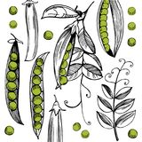 Vector Background With Hand Drawn Peas. Stock Photos