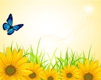 Vector background with yellow sunflowers stock illustration