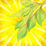 Vector backgroundl with sunrays and leaves Royalty Free Stock Photo