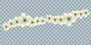 Vector Bali flowers border isolated on transparency grid background royalty free illustration